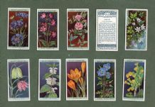 Cigarette cards set Wild Flowers 1923 ,Heather, Poppy, Cornflower